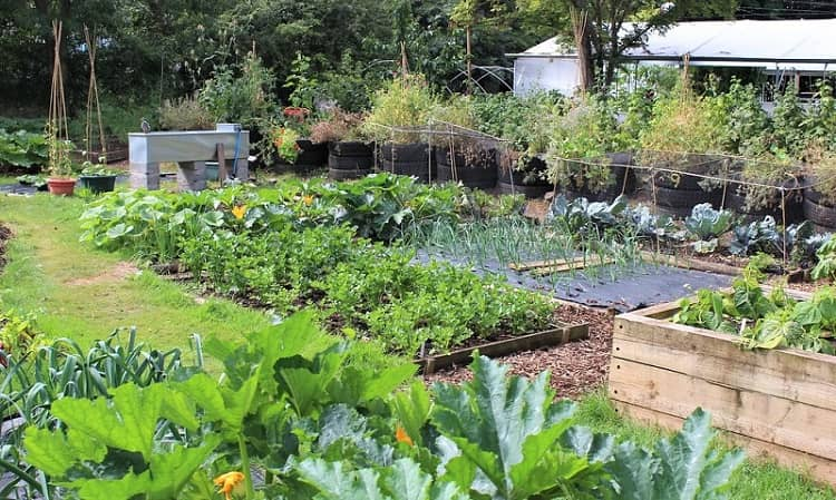 How to turn your backyard into a vegetable garden