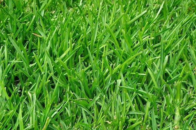 Fertilizing a lawn