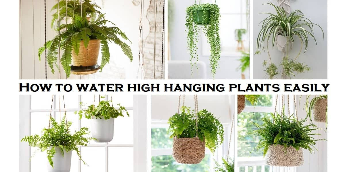 How to water high hanging plants easily without dripping