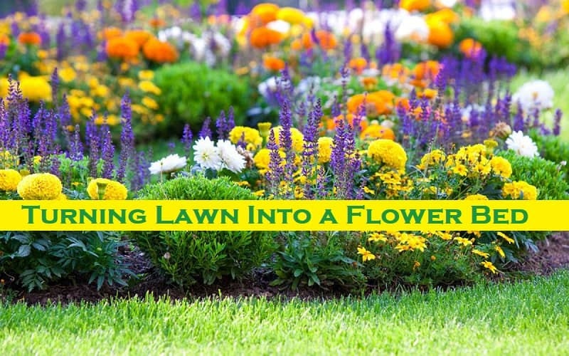 Turning Lawn Into a Flower Bed