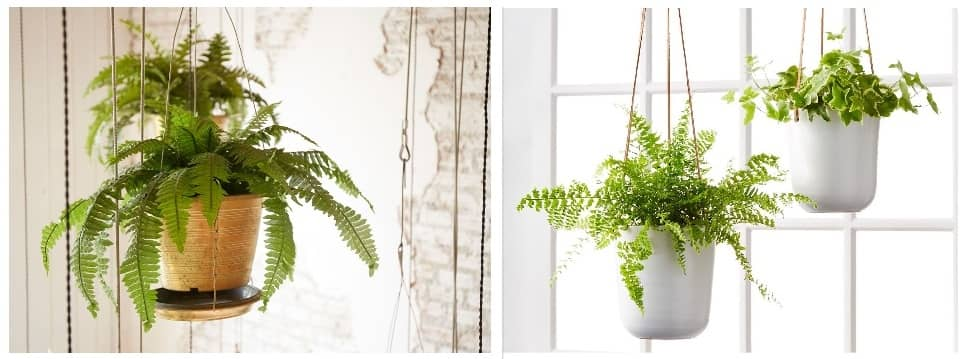 How to water high hanging plants