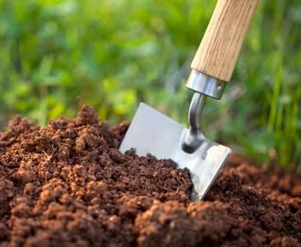 soil condition for flower bed