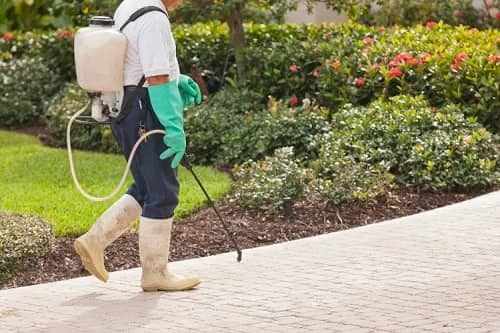 How to Apply Weed Killer on Lawn