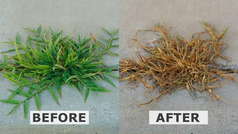 How to make weed killer using white vinegar