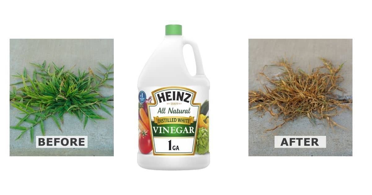 How to use white vinegar as a weed killer