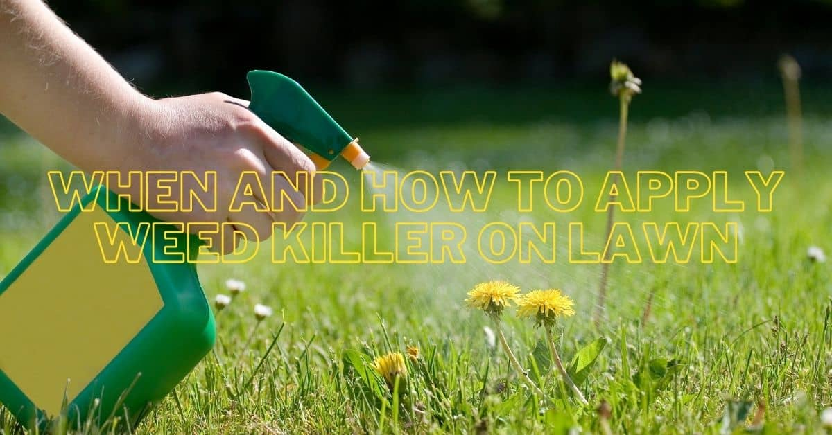 When and How to Apply Weed Killer on Lawn