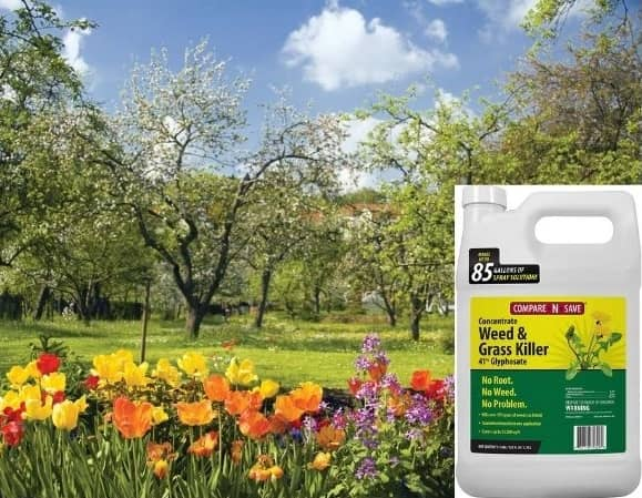What time is best time for using weed killers?