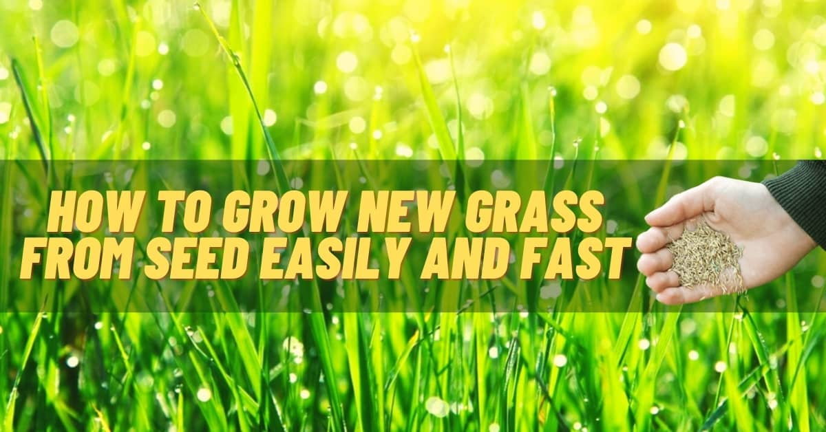 How to grow new grass from seed easily and fast