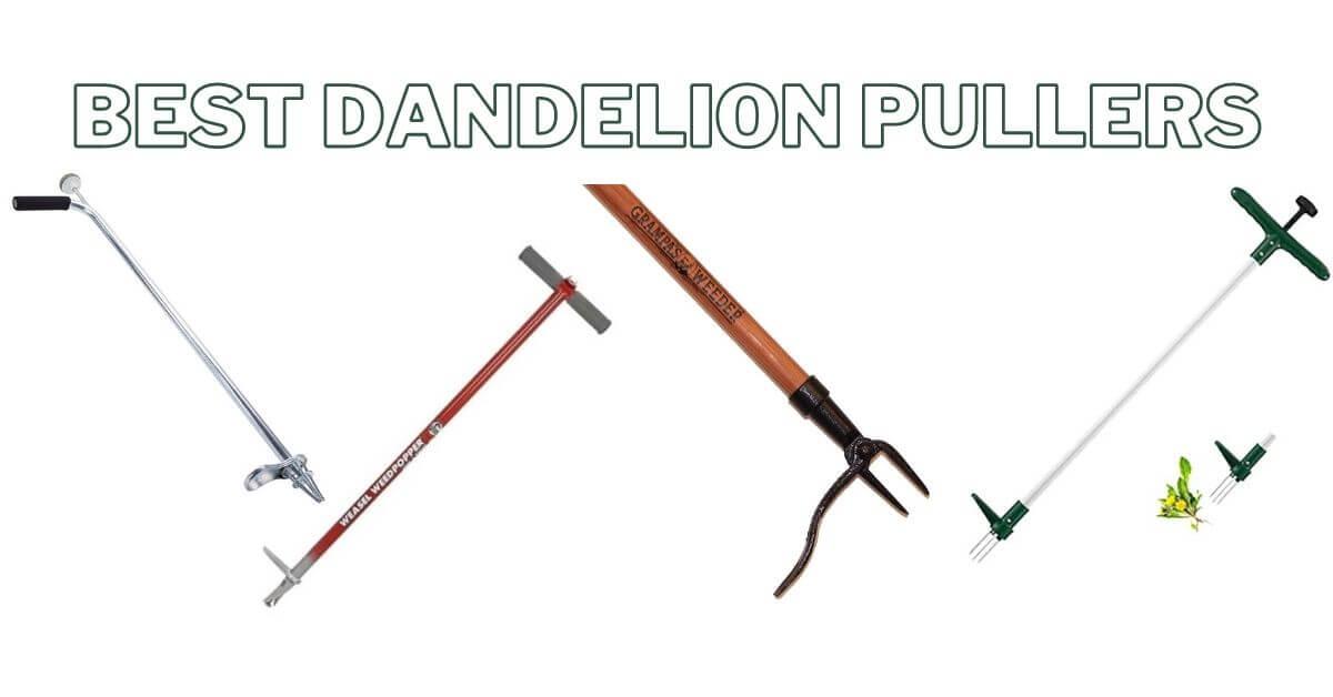 best dandelion pullers