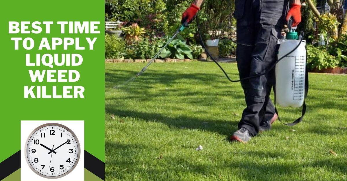 best time to apply liquid weed killer